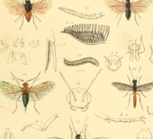 The Animal Kingdom by Georges Cuvier, PA Latreille, and Henry McMurtrie 1834  494 - Insecta Insects Sticker