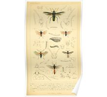 The Animal Kingdom by Georges Cuvier, PA Latreille, and Henry McMurtrie 1834  494 - Insecta Insects Poster