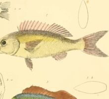 The Animal Kingdom by Georges Cuvier, PA Latreille, and Henry McMurtrie 1834  127 - Pisces Fish Sticker