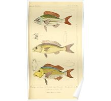 The Animal Kingdom by Georges Cuvier, PA Latreille, and Henry McMurtrie 1834  127 - Pisces Fish Poster