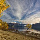 Wanaka Lake Tree 5 by Charles Kosina
