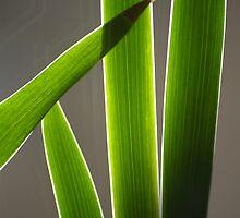 Backlit Leaves by Denitsa Dabizheva