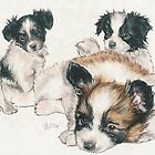 Papillon Puppies by BarbBarcikKeith