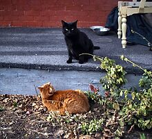 Two Cats in the Yard by M Sylvia Chaume