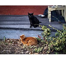 Two Cats in the Yard Photographic Print