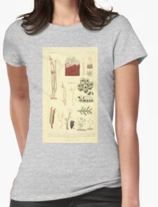 The Animal Kingdom by Georges Cuvier, PA Latreille, and Henry McMurtrie 1834  556 - Zoophytes Plant-Like Animals Womens Fitted T-Shirt