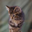 Pretty Kitty by Rosemaree