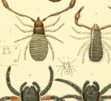 The Animal Kingdom by Georges Cuvier, PA Latreille, and Henry McMurtrie 1834  400 - Arachnides Arachnids Sticker
