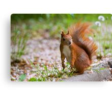 Yes? Canvas Print