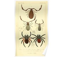 The Animal Kingdom by Georges Cuvier, PA Latreille, and Henry McMurtrie 1834  400 - Arachnides Arachnids Poster
