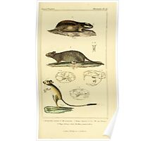 The Animal Kingdom by Georges Cuvier, PA Latreille, and Henry McMurtrie 1834 606 - Mammalia Mammals Poster