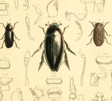 The Animal Kingdom by Georges Cuvier, PA Latreille, and Henry McMurtrie 1834  441 - Insecta Insects Sticker