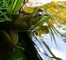 Green Green Frog by Artlife