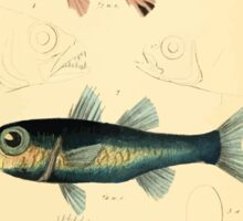 The Animal Kingdom by Georges Cuvier, PA Latreille, and Henry McMurtrie 1834  062 - Pisces Fish Sticker