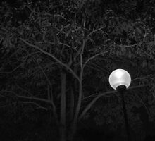 Light in the Dark by Mark Lee