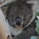 Furry friends in Tassie by Judi Corrigan