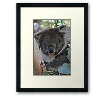 Furry friends in Tassie Framed Print