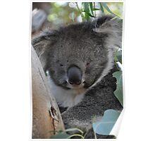 Furry friends in Tassie Poster