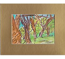 PARK SKETCH Photographic Print