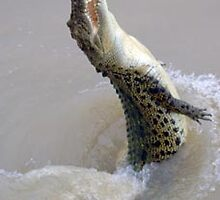 croc leaping out of water by baackie