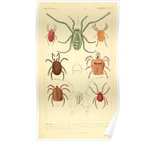 The Animal Kingdom by Georges Cuvier, PA Latreille, and Henry McMurtrie 1834  405 - Arachnides Arachnids Poster