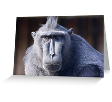 Why the long face ........  Greeting Card