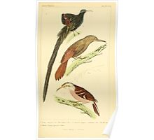 The Animal Kingdom by Georges Cuvier, PA Latreille, and Henry McMurtrie 1834 686 - Aves Avians Birds Poster