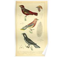 The Animal Kingdom by Georges Cuvier, PA Latreille, and Henry McMurtrie 1834 663 - Aves Avians Birds Poster
