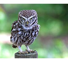 Who are you calling Shortie??? Photographic Print