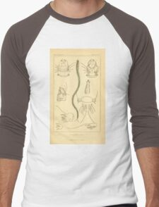 The Animal Kingdom by Georges Cuvier, PA Latreille, and Henry McMurtrie 1834  296 - Annelides Large Invertebrates or Worms Men's Baseball ¾ T-Shirt