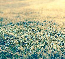 frost on grass  by Artur Mroszczyk
