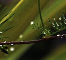 Raindrops on a Fern by myraj