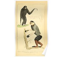 The Animal Kingdom by Georges Cuvier, PA Latreille, and Henry McMurtrie 1834 570 - Mammalia Mammals Poster