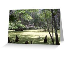 Old Florida Swamp Greeting Card