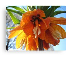 Name this Flower! - Crown Imperial (Thanks Gracey!) Canvas Print