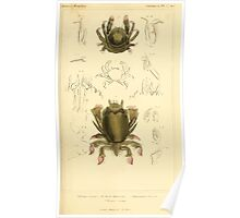 The Animal Kingdom by Georges Cuvier, PA Latreille, and Henry McMurtrie 1834  326 - Crustacea Crustaeans Poster