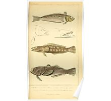 The Animal Kingdom by Georges Cuvier, PA Latreille, and Henry McMurtrie 1834  069 - Pisces Fish Poster