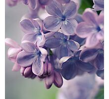 Lilac time Photographic Print