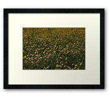 Yellow Summer Framed Print