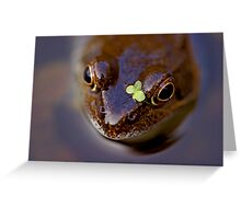 Frogs can look cute! Greeting Card