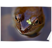 Frogs can look cute! Poster