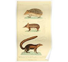 The Animal Kingdom by Georges Cuvier, PA Latreille, and Henry McMurtrie 1834 584 - Mammalia Mammals Poster