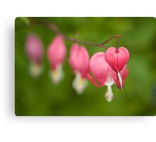Fading hearts! Canvas Print