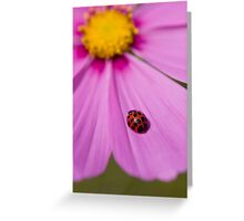 Ladybird on a Comos petal! Greeting Card