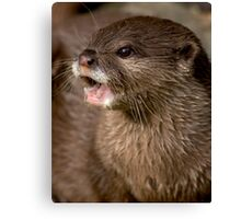 Short clawed otter! Canvas Print
