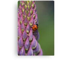 Ladybird hanging onto a lupin! Canvas Print