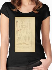 The Animal Kingdom by Georges Cuvier, PA Latreille, and Henry McMurtrie 1834  291 - Annelides Large Invertebrates or Worms Women's Fitted Scoop T-Shirt