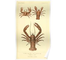 The Animal Kingdom by Georges Cuvier, PA Latreille, and Henry McMurtrie 1834  334 - Crustacea Crustaeans Poster