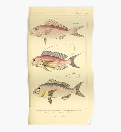 The Animal Kingdom by Georges Cuvier, PA Latreille, and Henry McMurtrie 1834  121 - Pisces Fish Poster