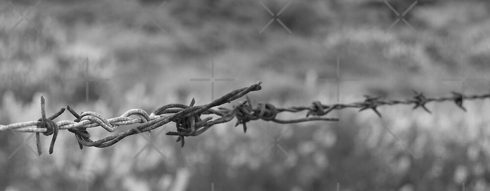 Barbed wire, in B&W by brians101